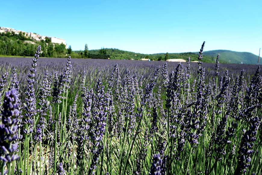 Forcalquier: walking trips in Provence
