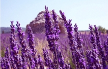 provence lavender cycling tour