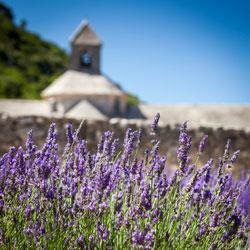 Provence lavender field + Abbey of Senanque