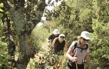Walk cedar forest bonnieux Luberon