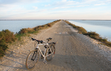self guided cycling in camargue and provence famous for bullfights