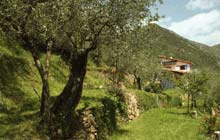 best walk in the french riviera along olive groves