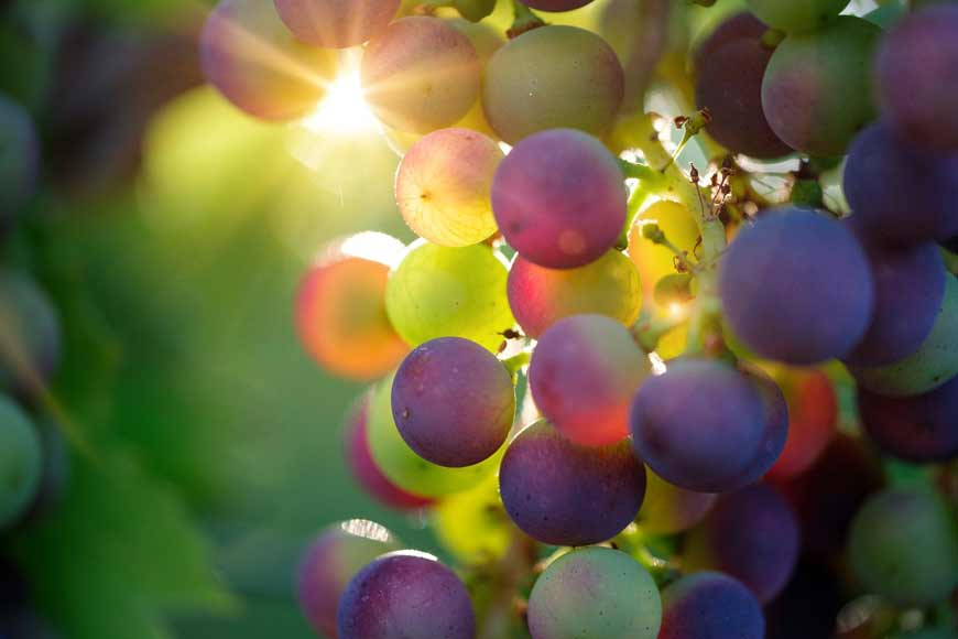 Explore the wine-making village of Tavel