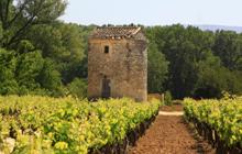 vineyards rose of provence grapes luberon