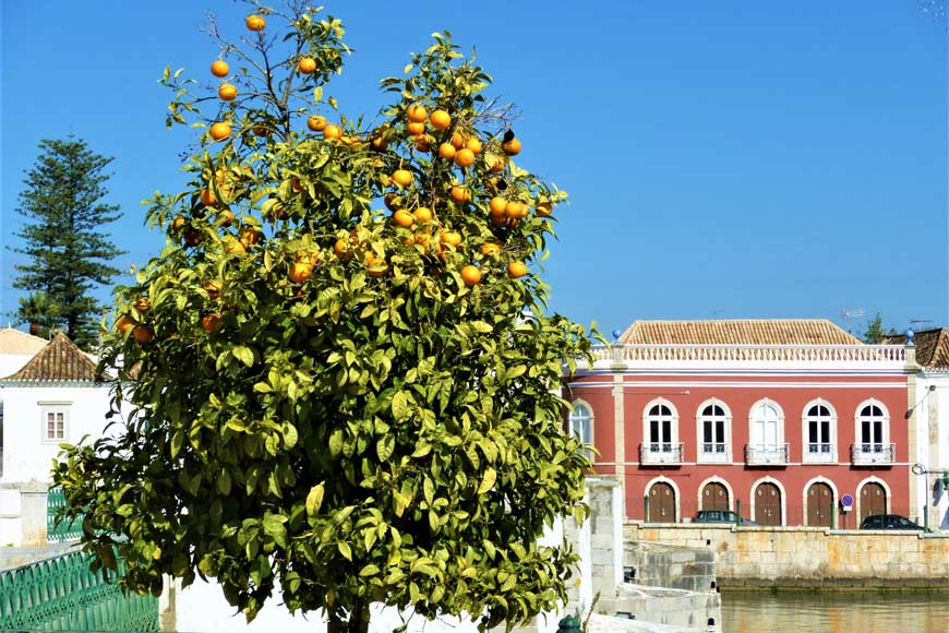 Oranges in the Algarve