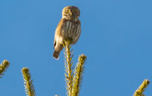 birdwatching tour in france provence