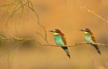 provence ornithology tour